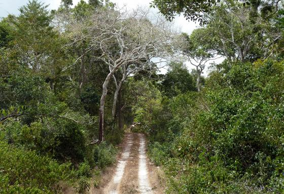 The Arabuko-Sokoke forest is home to many animals and plants that live only in that area. (AP)