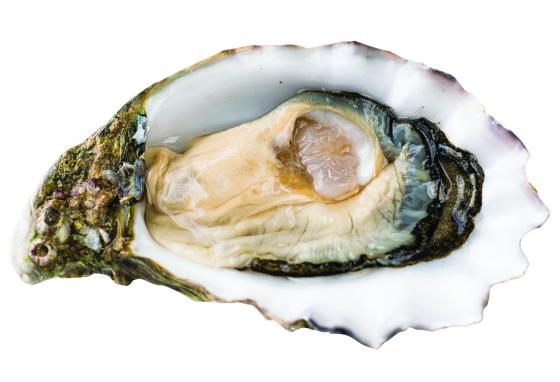 Oysters filter water and stabilize shorelines.
