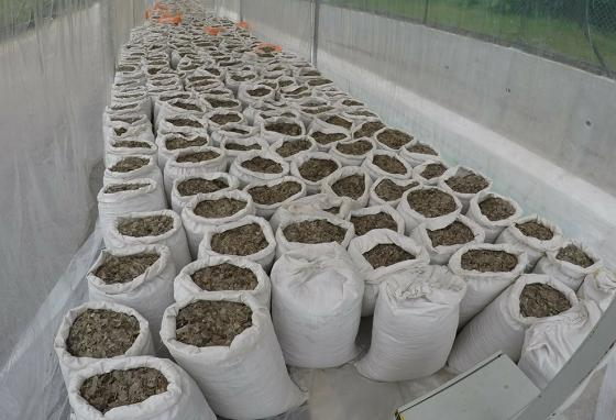 Over 12 tons of pangolin scales worth around $38.1 million are displayed in Singapore after another seizure from smugglers. (AP)