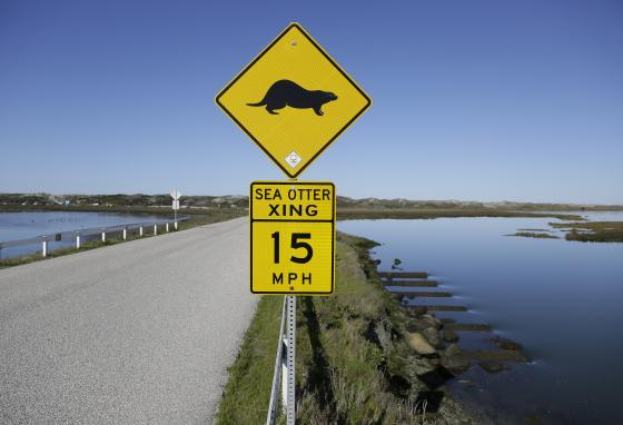 A sign warns drivers to watch for sea otters at the Elkhorn Slough. The slough is a pocket of tidal salt marsh and rich seagrass in Monterey Bay. (AP/Eric Risberg)